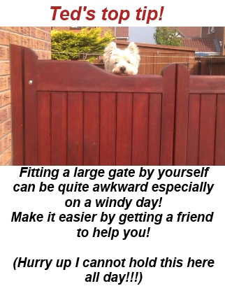 Westie holding a gate up